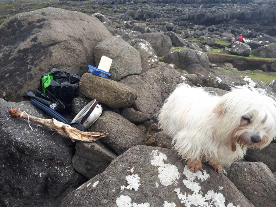 Dog at Bøssdalafossur in Vágar, Faroe Islands